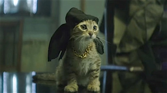 32-Keanu-Kitten-100-Best-Cats.jpg