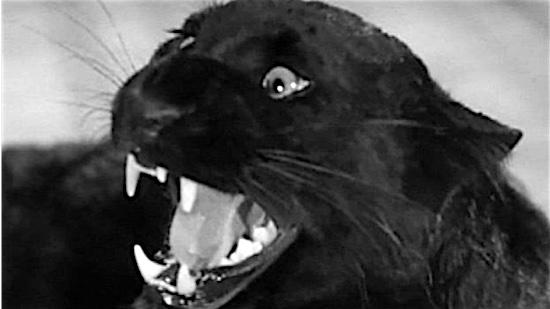 33-catpeople-1944.jpg