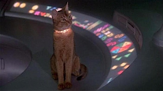 37-The-Cat-From-Outer-Space-Jake-100-Best-Cats.jpg