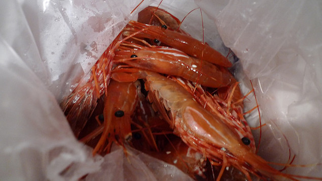 Prawns Join the Fight Against Parasites