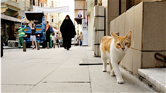 45-Cats-of-Kedi-100-Best-Cats.jpg