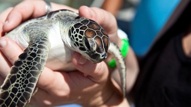 Climate Change Could Be Responsible For Too Many Female Sea Turtles