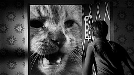 49-The-Incredible-Shrinking-Man-Butch-100-Best-Cats.jpg