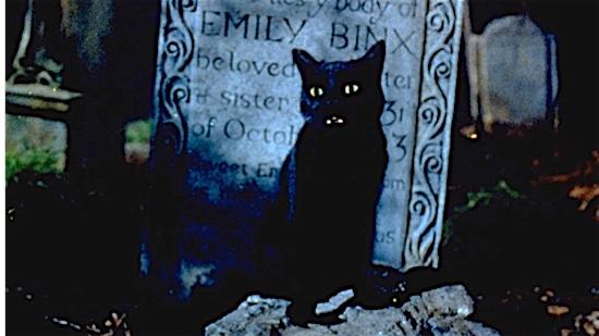 53-Hocus-Pocus-Binx-100-Best-Cats.jpg