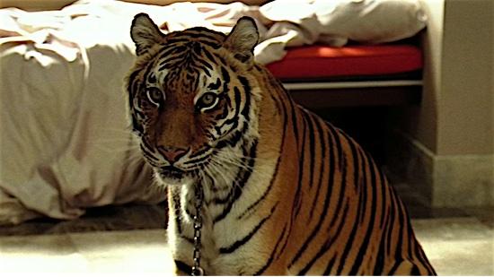 54-The-Hangover-Tiger-100-Best-Cats.jpg