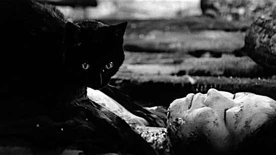 56-Kuroneko-Black-Cat-100-Best-Cats.jpg