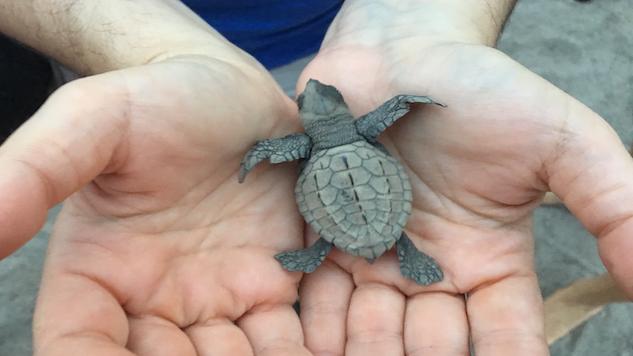 7-Baby Turtle.JPG