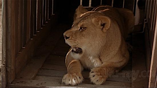 72-Secondhand-Lions-Jasmine-100-Best-Cats.jpg