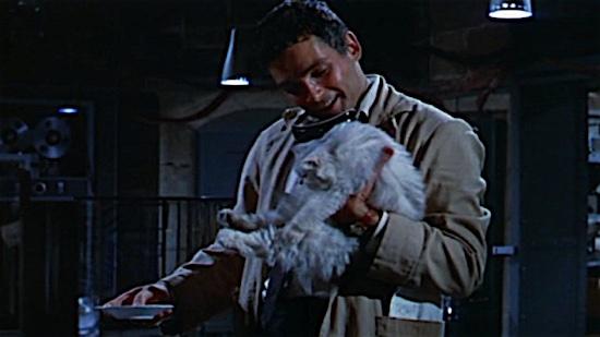73-The-Fly-Dandelo-100-Best-Cats.jpg