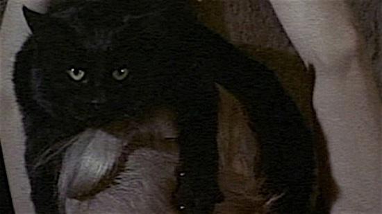 76-tales-of-terror-100-Best-Cats.jpg