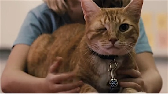 77-Gifted-Fred-100-Best-Cats.jpg