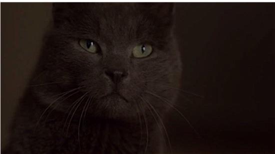 80-Elle-Marty-100-Best-Cats.jpg