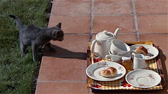 82-Day-for-Night-Kitten-100-Best-Cats.jpg