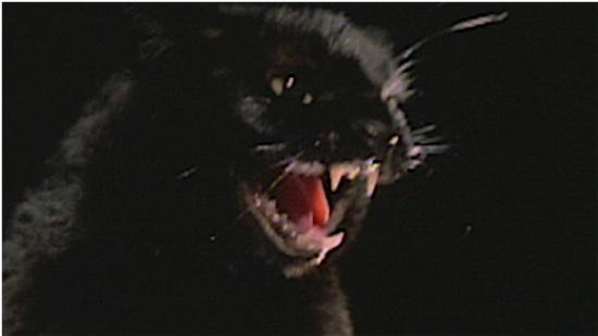 85-The-Black-Cat-100-Best-Cats.jpg