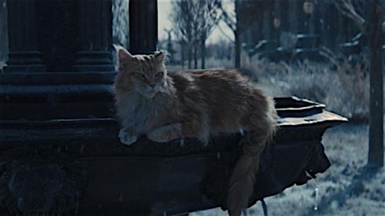 88-The-Hunger-Games-Buttercup-100-Best-Cats.jpg
