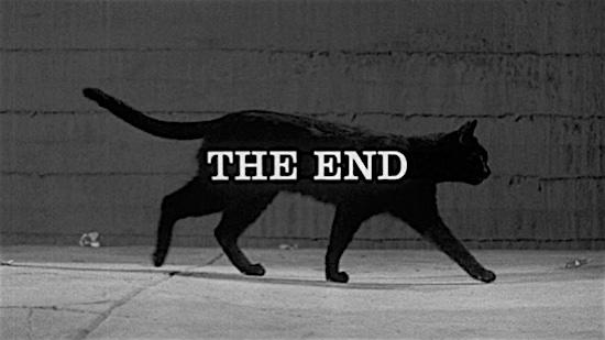 96-Walk-on-the-Wild-Side-Alley-Cat-100-Best-Cats.jpg