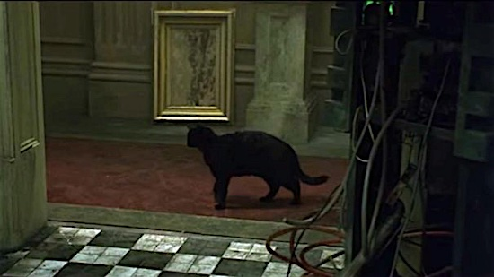 98-The-Matrix-Deju-Vu-Cat-100-Best-Cats.jpg