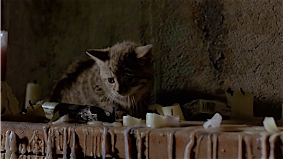 99-Trainspotting-Kitten-100-Best-Cats.jpg