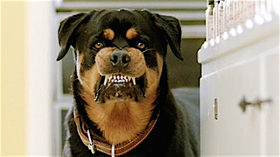 Best in Shows: The 100 Most Iconic Dogs in Movies :: Movies