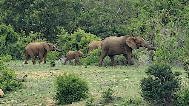 Trump Admin: It's Now Okay to Import the Heads of Endangered African Elephants