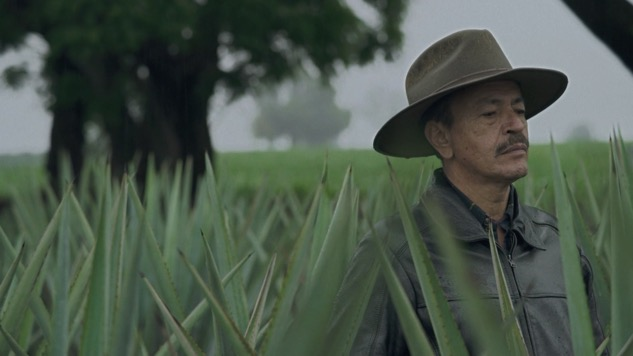 Watch: <i>Agave: The Spirit of a Nation</i> Takes An Artful Look at the Land of Mezcal and Tequila