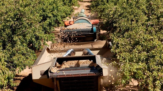 The Billion-Dollar California Almond Industry's Blossoming Future