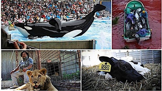 5 Eye-Opening Documentaries about Animal Rights