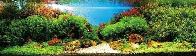 AquaticArt3.jpg