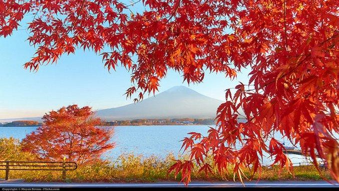 Breakout Role: Japan