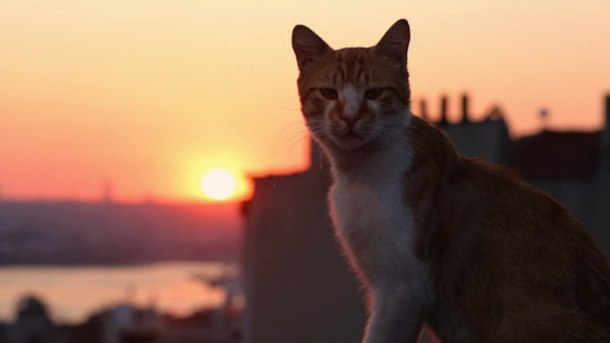 The Best Cat Documentaries