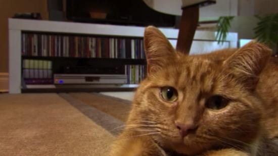 CAT-DOCS-livingroom.jpg