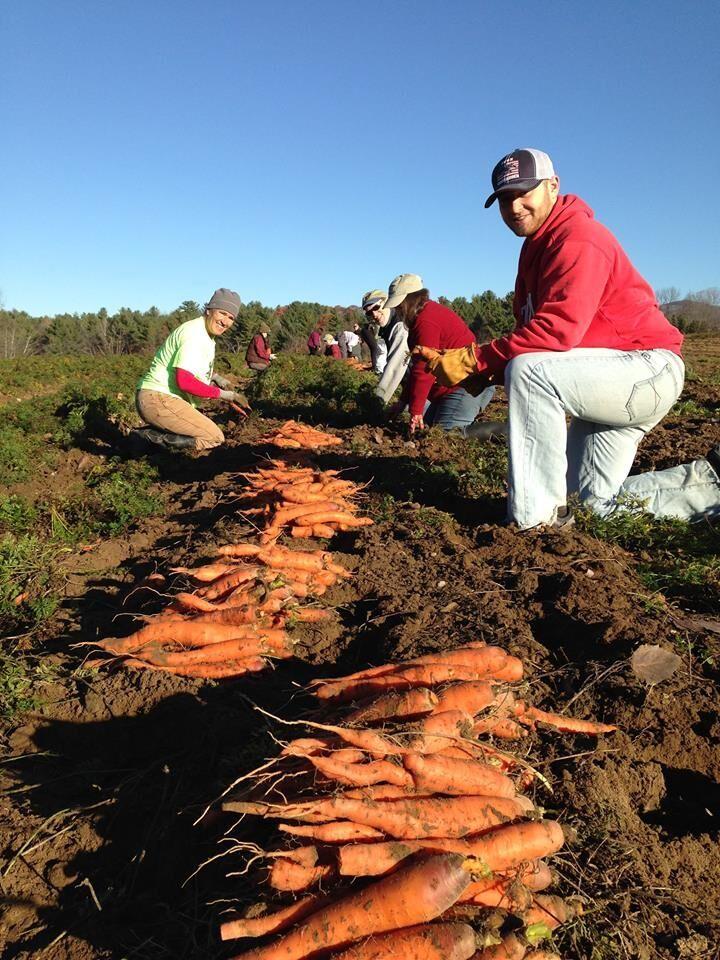 Carrots1.jpeg