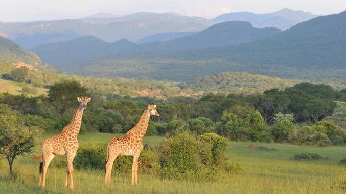 Jet-Set Bohemian: Off-Season Safari Spots