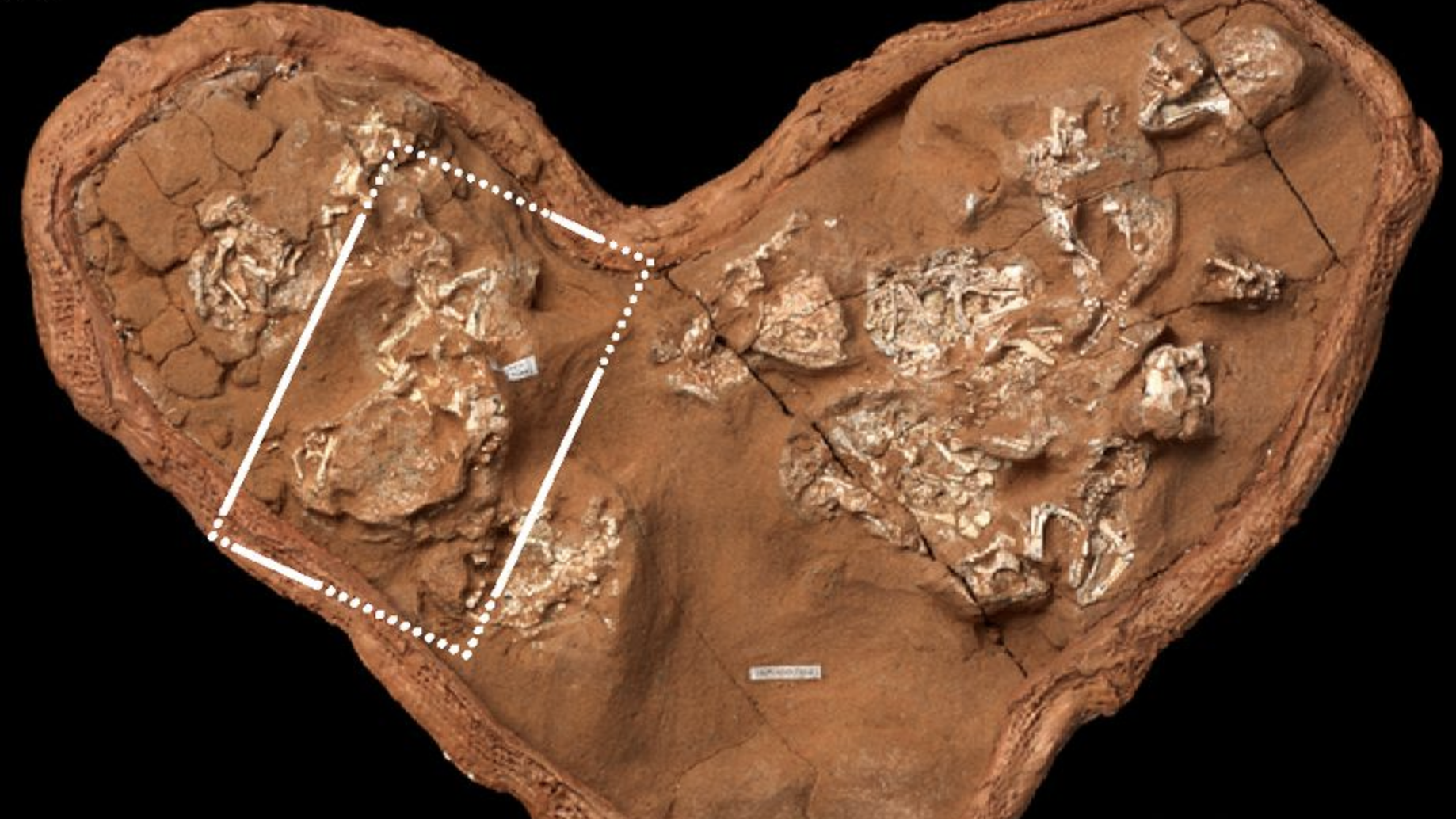 New Dino Research Complicates Previous Beliefs