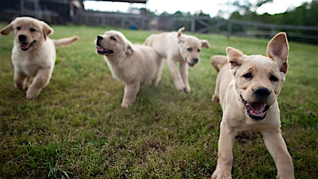 5 Heartwarming Documentaries about Dogs