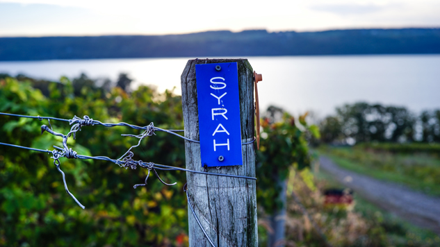 Element Winery Syrah Vineyard, Photo Credit, Daniel Bell Photography.jpg