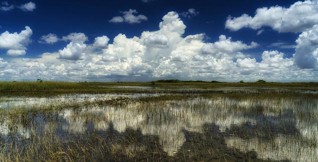 Everglades_beauty.jpg