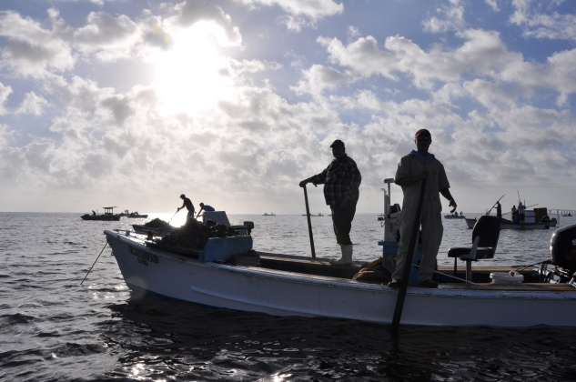 Warming Signs: Climate Change Means A Sea Change for Fishermen and Scientists