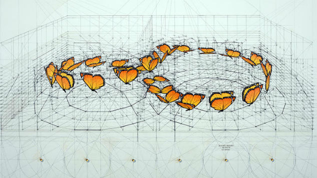 Venezuelan Artists Brings New Life to Nature's Golden Ratio With Coloring Book