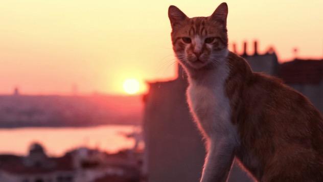 <i>Kedi</i>
