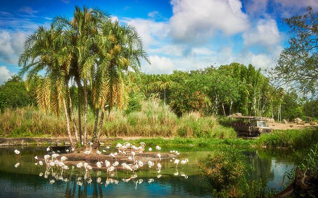 Kilimanjaro Safaris at Disney's Animal Kingdom.jpg