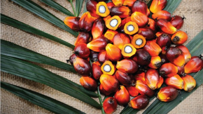 What's Up With That Food? Red Palm Oil
