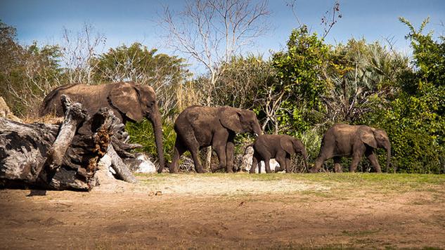 The Bucket List: 8 U.S. Safari Experiences