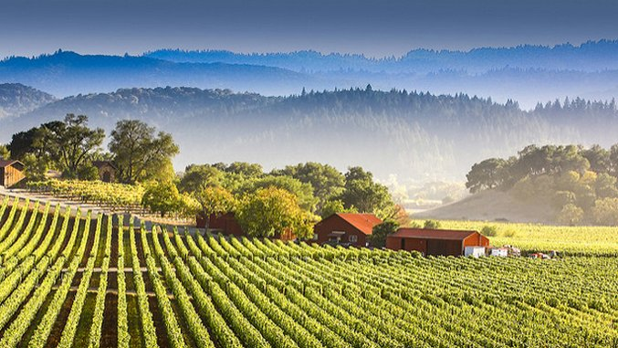 The Bucket List: A Guide to the World's Major Wine Regions