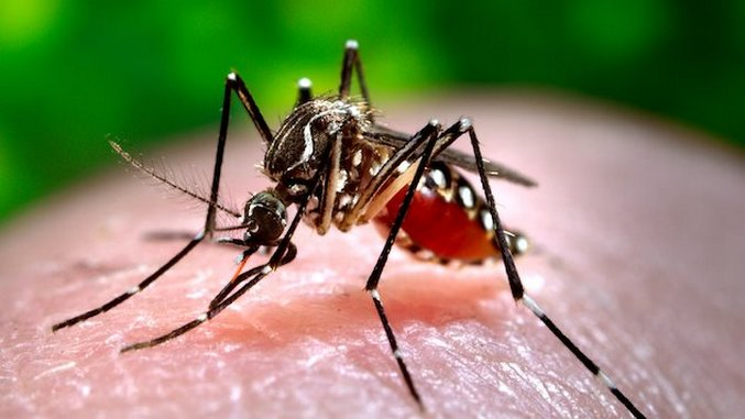Zika Virus: Brazil Has Officially Ended Its 'National Emergency'