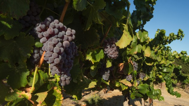 Paso Robles Wine Country Donates Fire Relief Funds to North Coast Charities