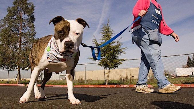 It's Time to End Breed-Specific Legislation Like the