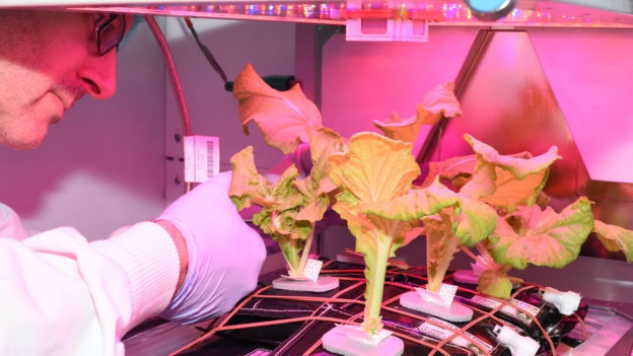 Astronauts on the ISS Have Successfully Grown Cabbage in Space