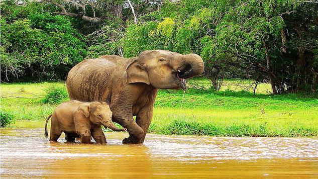 Sri Lanka Elephant Breakout.jpg