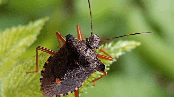 Weird Science: Eating Insects To Fight Global Warming & The Miracle of Chicken Shit